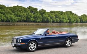 Картинка деревья, Bentley, кабриолет, Cabriolet, Azure