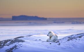 Картинка зима, снег, друг, собака