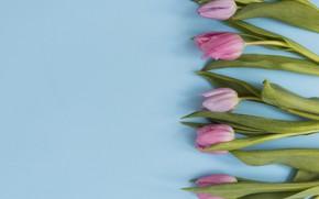 Картинка цветы, тюльпаны, розовые, fresh, pink, flowers, tulips, spring, tender