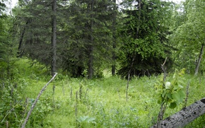 Картинка Зелень, Трава, Деревья, Лес, Grass, Green, Forest, Trees