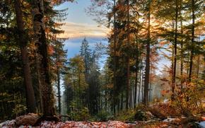 Картинка Осень, Деревья, Снег, Лес, Fall, Листва, Snow, Autumn, Forest, Trees, Leaves