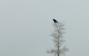 Картинка природа, дерево, минимализм, ворон