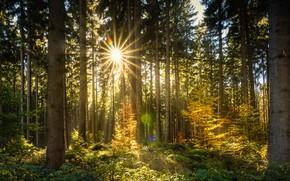 Обои солнце, деревья, лучи, осень, лес