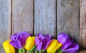 Картинка цветы, желтые, фиолетовые, тюльпаны, fresh, yellow, wood, flowers, beautiful, tulips, spring, purple