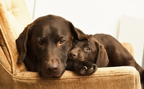 Картинка друзья, дом, собаки
