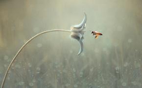 Картинка цветок, макро, пчела, фон, боке