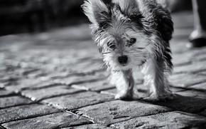 Картинка взгляд, собака, лохматая