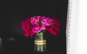 Картинка цветы, лепестки, пионы