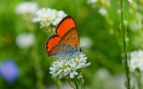 Обои цветок, Макро, Бабочка, Flower, Macro, Butterfly