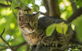 Картинка котёнок, кот, ветки, дерево