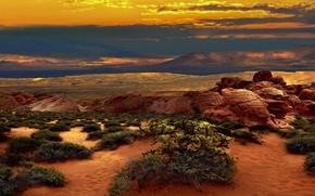 Обои Невада, камни, Америка, небо, засуха, жара, природа, пейзаж, тучи, облака, скалы, кактусы, колючки, растительность, каньоны, ...