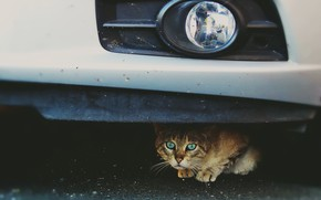 Обои машина, фон, кошка