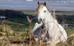 Картинка поле, конь, лошадь