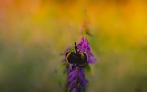Картинка пчела, фон, растение