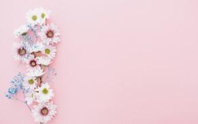 Обои цветы, ветка, декор, фон, хризантемы