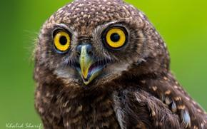 Картинка глаза, сова, перья