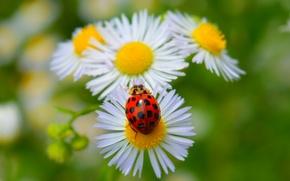 Картинка Весна, Ромашки, Spring
