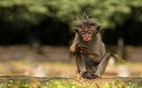 Картинка природа, темный фон, фон, лапки, макияж, обезьяна, прическа, сидит, детеныш, обезьянка, ногти, зоопарк, косметика, маникюр, …