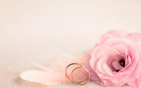 Картинка розовый, праздник, кольца, свадьба, eustoma