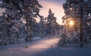 Обои зима, лес, солнце, свет, снег, деревья, природа