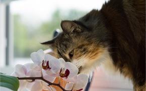 Обои кот, цветок, орхидея, кошка