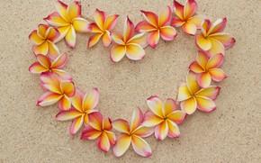 Обои plumeria, heart, love, sand, песок, romantic, пляж, beach, плюмерия, сердце, floral, flowers, цветы