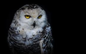Картинка взгляд, ночь, сова