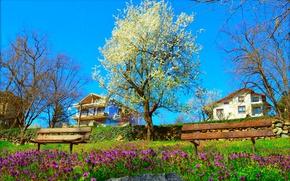 Картинка Природа, Весна, Парк, Nature, Park, Spring, Цветение, Flowering, Скамейки