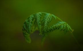 Картинка макро, фон, растение