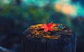 Картинка Orange, forest, nature, wood, Full HD