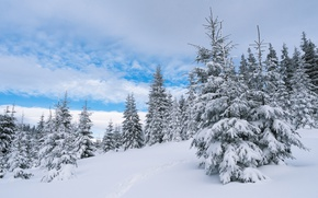 Картинка зима, лес, облака, снег, деревья, следы, сказка, ели, склон, холм, мороз, сугробы, ёлки, тропинка, голубое …