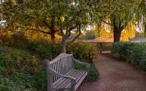 Картинка осень, деревья, скамейка, пруд, парк, забор, дорожка, США, кусты, Chicago Botanic Garden