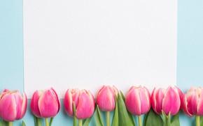 Картинка цветы, весна, тюльпаны, розовые, fresh, pink, flowers, tulips, spring