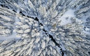 Обои зима, лес, снег, вид сверху
