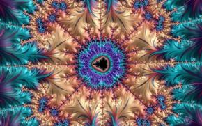 Картинка цветок, узор, цвет