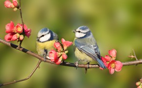 Картинка веточка, Птички, цветы весна