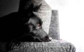 Картинка друг, грусть, собака