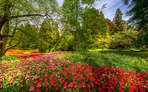 Картинка деревья, цветы, парк, весна, Германия, тюльпаны, Germany, Баден-Вюртемберг, Baden-Württemberg, Mainau Island, Остров Майнау
