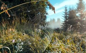 Картинка лес, лето, природа, роса, блики, паутина, утро