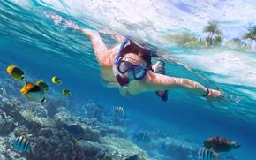 Картинка diving, marine life, scuba diving
