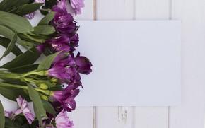 Картинка фиолетовый, фон, Цветы, Альстромерия