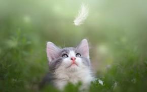 Картинка зелень, листья, природа, животное, перо, мордочка, котёнок