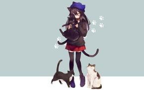 Обои девочка, кошка, кот, аниме, кошки