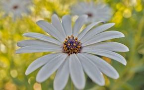 Картинка цветок, природа, лепестки