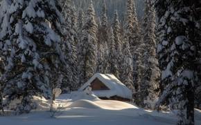 Обои зима, лес, снег, избушка, ели, сугробы, хижина, Россия