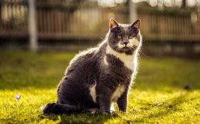 Картинка зелень, кошка, трава, кот, морда, природа, серый, забор, весна, двор, красавец, желтые глаза
