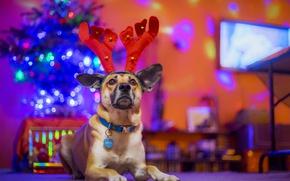 Обои друг, собака, праздник, рога, новый год