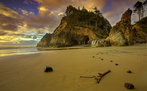 Обои США, пляж, Орегон, берег, деревья, скалв