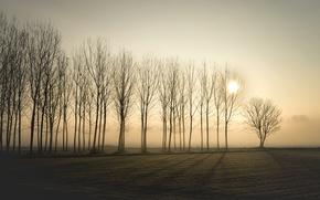 Картинка деревья, закат, туман