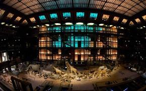 Картинка Франция, Париж, Большая галерея эволюции, Национальный музей естественной истории